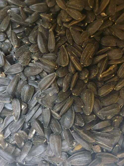 Sun Flower seeds Small